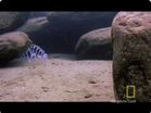 Funny animal videos - Fish Vs Turtle