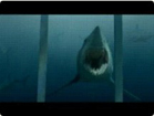 Funny animal videos - Shark Cage