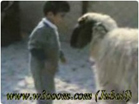 Funny kid videos - Boy and sheep