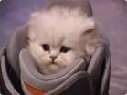 Funny cat videos - Mini Cat