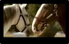 Funny animal videos - Budweiser - Clydesdale Circus