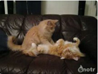 Funny cat videos - Cat Massage