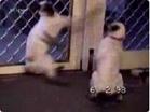 Funny animal videos - LolTV - Funny Compilation #10