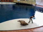 Funny animal videos - Dancing Seal - Awesome