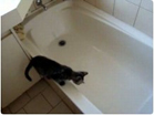 Funny cat videos - Cat Bathtube Freakout