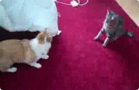 Funny cat videos - DOG VS CAT