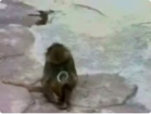 Funny animal videos - Funny Monkey