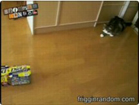 Funny cat videos - Fat Cat VS Small Box