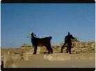 Funny animal videos - Boooooob Edddddddd