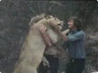 Funny animal videos - Christian the Lion