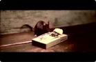 Funny animal videos - Mouse very Sad