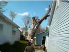 Funny stupid videos - Tree Removal FAIL