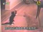 Funny cat videos - Dare you joke on me