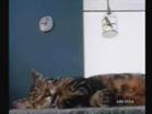Funny video commercials - DHL