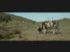 Funny animal videos - Matrix cow