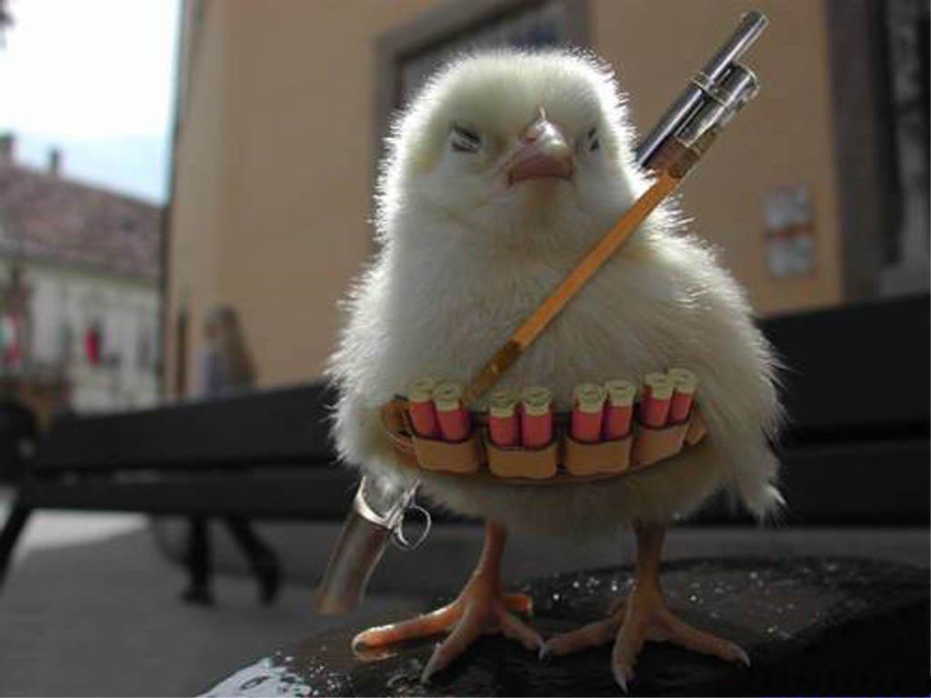 The brave chicken soldier