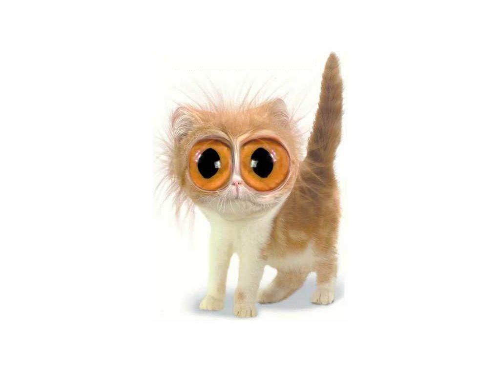 A wide eyes cat