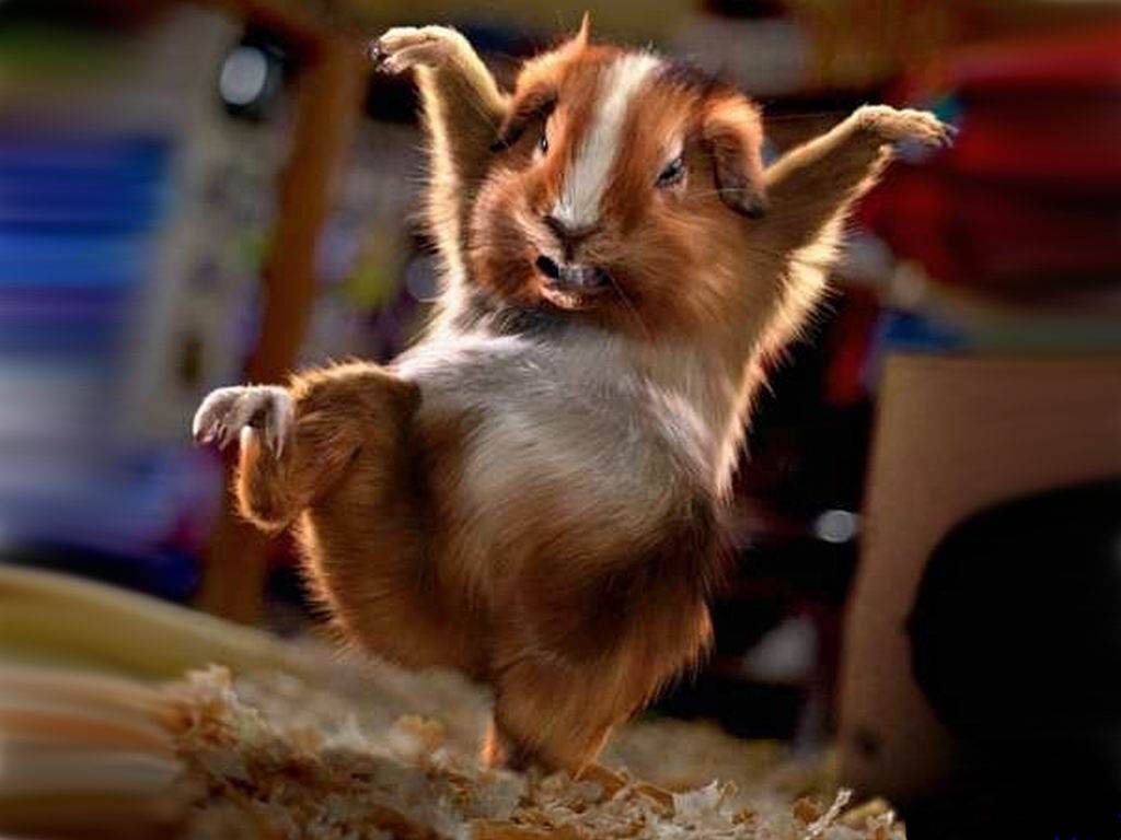 Mouse's crazy dance
