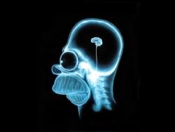 Smoker's brain