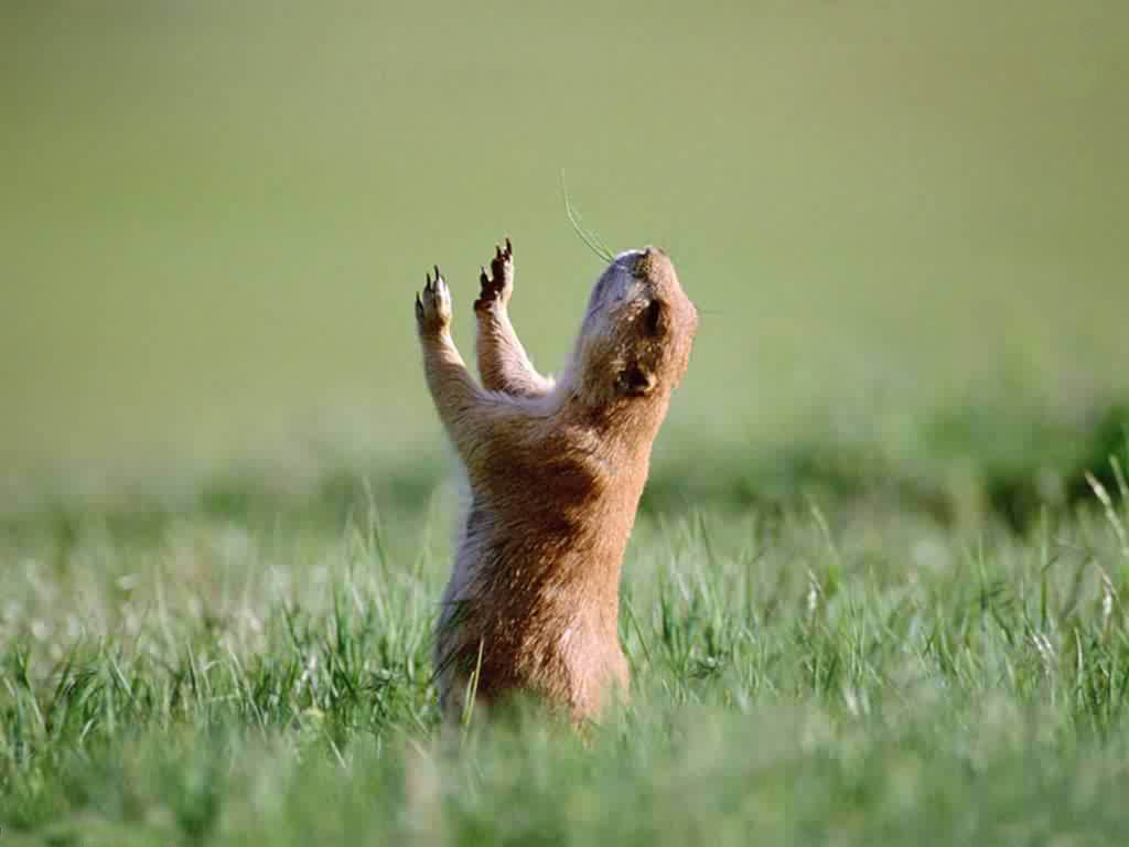 Squirrel pray