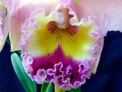 Flower Wallpaper - Orchid