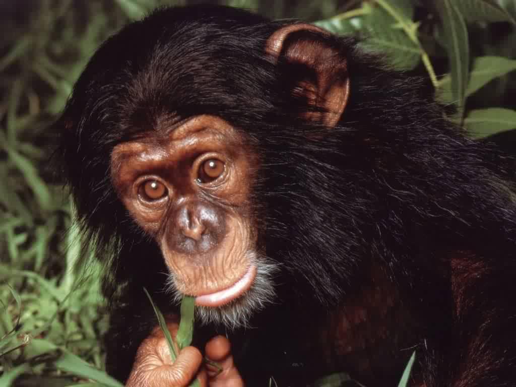 Monkey eats