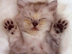 Animal Wallpaper - Cat sleeps