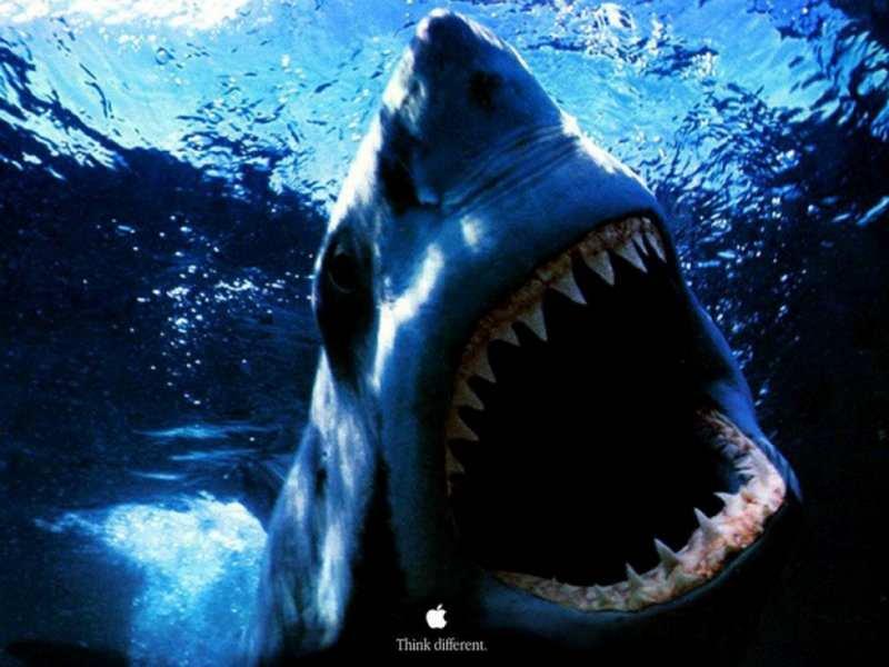 Cruel shark