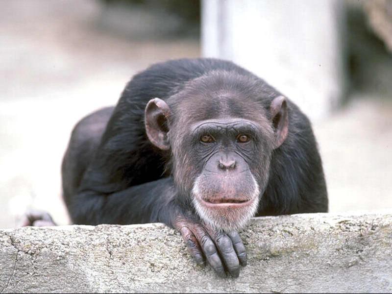 Gentle monkey