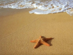 Beach Wallpaper - Sea star