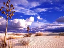 Landscape Wallpaper - Nice desert