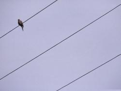 Animal Wallpaper - Lonely bird