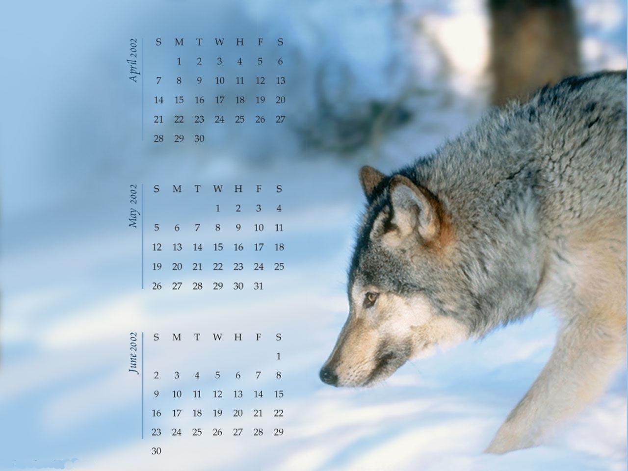 Wolf calendar