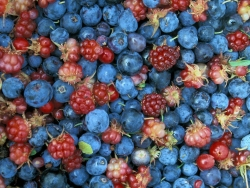 Art Wallpaper - Mixed berries
