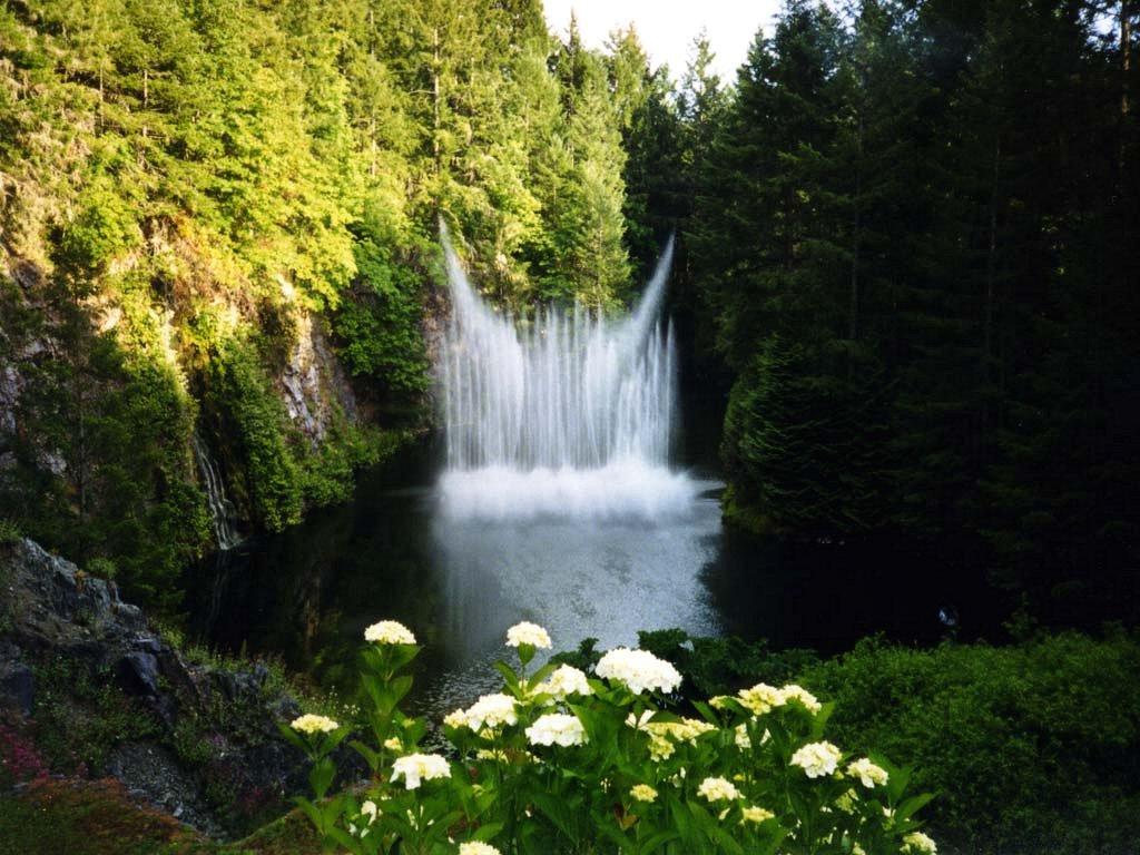 Forest splash