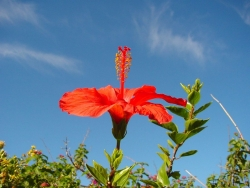 Flower Wallpaper - Oranger hibiscus