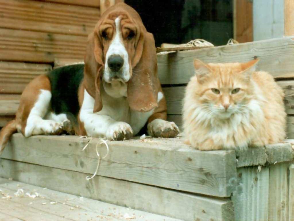Old dog & cat