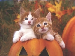 Animal Wallpaper - Halloween kittens
