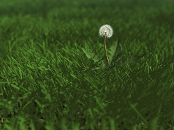 3D and Digital art Wallpaper - Dandelion