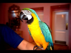 Animal Wallpaper - Parrot