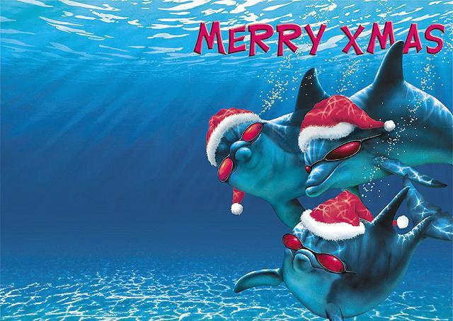 Dolphin with Xmas