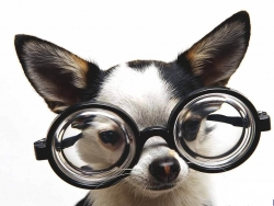 Funny Wallpaper - Dog - The professor