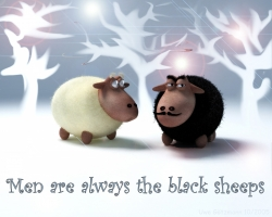Funny Wallpaper - The black sheeps