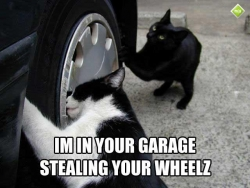 Funny Wallpaper - I'm in your garage
