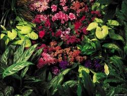 Flower Wallpaper - Wild flowers