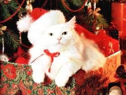 Animal Wallpaper - Xmas cat