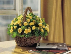 Flower Wallpaper - Yellow rose basket
