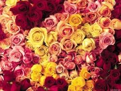 Flower Wallpaper - Rose forest