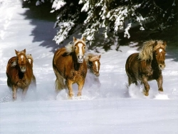 Animal Wallpaper - Wild horses