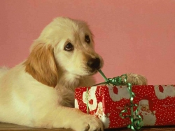 Animal Wallpaper - Dog's present